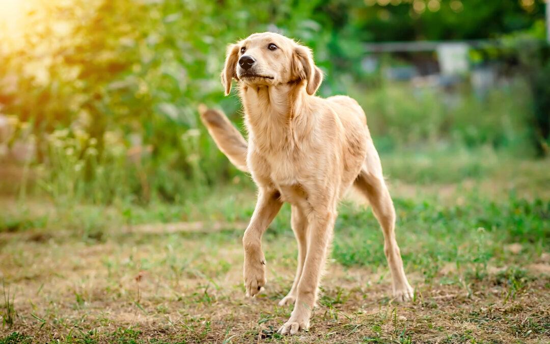 Vakantie in de Achterhoek? Wij passen graag op uw hond!