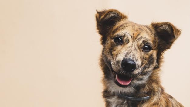 Hondenpension-hesterhoeve-hondenopvang