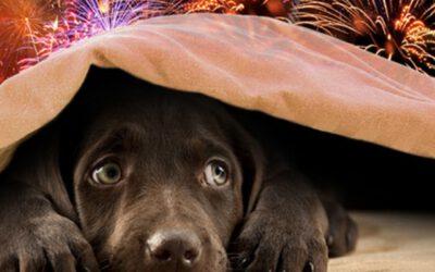 Hondenpension tijdens oud en nieuw