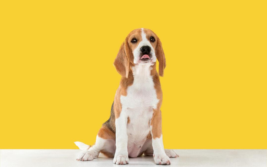 Wat zijn de voor- en nadelen van het castreren of steriliseren van een hond?